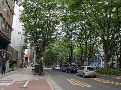 仙台駅から20分ほどで定禅寺通りまで歩いてきた。 緑がきれい~。