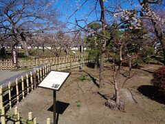 弘道館内には沢山の梅の木が植樹されていました.