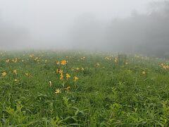 霧の中を運転して霧降高原に行ったらやっぱり霧。霧のニッコウキスゲという感じで、ま、これも幻想的でいいか、ととりあえず階段を登り始める。