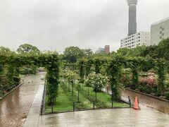 部屋で一休みしてから、雨の様子を見ながら食事に出ます。 その前に山下公園を散歩します。 山下公園は今では横浜有数の観光スポットですが、元は関東大震災のがれきを埋め立てて作られました。バラ園や歌碑や記念碑など見どころの多い公園です。