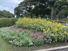 山下公園に着きました。 花がきれいに咲いています。