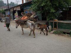 馬が荷役に使われていました。 かなり小ぶりです。