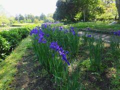 まずやってきたのは早水公園。ちょうどあやめの時期かも、ということで。 数年前に見た「一面のあやめの花」の区域を見つけられず。公園の地図見てもよくわからず。この公園、広すぎです。池のあるとこだけ見て先を急ぎました。 今日は花より団子。団子が待っている。