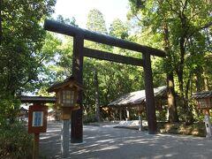宮崎神宮にやってきました。 ここには有名な白藤があるのです。 昨日鹿児島で満開だったので期待。