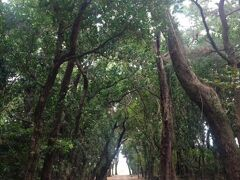 大東神社の参道。背の高い樹木が荘厳な雰囲気を演出。
