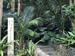 さらに北上し国定天然記念物のヤエヤマヤシ群落に立ち寄ってみました。