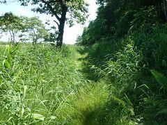 こちらの北斗方面に行きます。 この道は鶴居村営軌道という鉄道の跡で遊歩道として整備されています。 ここはちょっと草がありますが先は綺麗に整備されています。