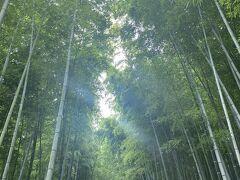 竹林の道。こちらも人気の観光スポット。