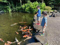 食後は鯉のエサやりへ。 ここは見浜園手前の鯉がいる池、またも当日分のエサはすでに売り切れ。 見浜園内の池の鯉の分のえさはまだ残っているとのこと…