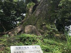 11:02 文化会館北側にある塚崎の大楠を訪ねる頃には雨が上がりました。