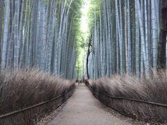 上りきって駅を出たら、すぐに「竹林の小径」があります。