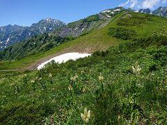 けいそうの先には雪渓と唐松岳