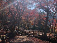ウェスティンの朝食を満喫した後、荷物を京都駅のサテライトへ送っていただき本日の目的の瑠璃光院へ。  こちらは11時30分の観覧予約を入れていました。 少し早くついてしまったので、近くの紅葉がとても綺麗な小山へ行きました。  八瀬比叡山口駅で降りる人たちは大体瑠璃光院へ向かうのですが、こちらへ来る方はほとんどいなかったので、景色を独り占めしていました。