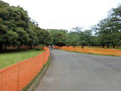 代々木公園に来ました。 この時期はパブリックビューイングにするかで問題になっていた代々木公園。 オレンジの柵でずっと囲まれている。