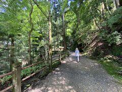 そんな新緑の中 今日はお元気のフリの母 最近散歩をサボるのでいい機会になった