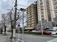 <中岡崎駅前の通り>  岡崎公園までは徒歩10分弱。 桜並木を通って行きました。