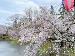 <岡崎公園>  満開の桜と桜まつりの提灯♪