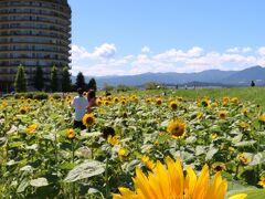 なんとか到着 第一なぎさ公園 滋賀県守山市今浜町地先 比良山系の対岸の琵琶湖沿いにある自然公園 約4,000平方Mの園内に約12000本のヒマワリ
