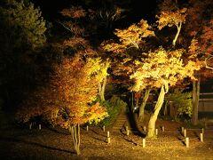 もみじ園のライトアップ