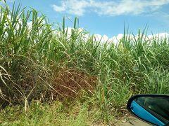 島では、サトウキビ畑が広がっていましたが、なんとなく荒れた印象でした。 サトウキビ産業は今、どうなってるんでしょう? 沖縄の産業って観光のほかに何があるんだろう?  ウ~ム、よく分からない…  (-_-;)    ザワワ ザワワ ザワワ ♪♪