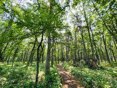大鵬相撲記念館の裏手の駐車場に車を停めて、硫黄山まで続くつつじヶ原自然探勝路を歩いてみます。 片道2.4km、40分ぐらい。 まずは広葉樹林帯。 道が整備されているので歩きやすいです。