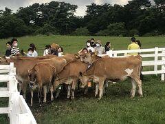 やまねミュージアム見た後は、牛さん達にエサ(その辺りの草)をあげてるお子ちゃま達を見学(^_^)