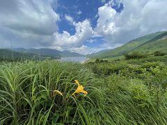 https://4travel.jp/travelogue/11627374  この時に頂いていたコメントで7月にはニッコウキスゲが咲くと教えて頂いていました♪ そして、okushitwさんの旅行記で野反湖のニッコウキスゲを見たばかり♪ https://4travel.jp/travelogue/11701871 お蕎麦屋さんを出たところで夫がそのことに気付き「野反湖に行ってみようか」と言い出したので「ラッキー♪行こう~!」となりました!(^^)!4トラのお仲間に感謝~ヾ(≧▽≦)ノ
