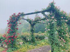 ランチを食べていたら降っていた雨がやんできたので、レイクガーデンを散策 バラが満開でお天気が悪いながらも、バラの香りが漂っていました