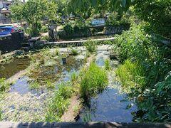 続いて、「三島梅花藻の里」を寄り道。