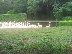 参拝後、フェニックス自然動物園に行き、象・レッサーパンダ・キリン・チンパンジー、フラミンゴのショウを観ました。