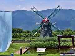 アクアワールド水郷パークセンター この風車は、日本とオランダの友好親善のシンボルとして建設され 風車も回り.手前の池もオニバスの花が咲いていたが 今は、かっての姿なく、風車は10年前ぐらいから止まり 絶滅危惧Ⅱ類に指定されているオニバスも咲かないか、人影がなくなる。 ハスの自生地として名をはせていたが 2016突然消滅してしまった。