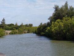 島尻のマングローブ林へ