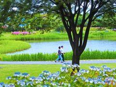 その目玉は、この季節のみのお愉しみである 紫陽花の乱舞! 120余種・10,000余株の紫陽花が6月~7月に かけて一斉に咲きそろいます!