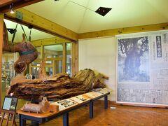 チェックインの15時まであと2時間。 屋久島の山々は厚い雲で隠れているが、雨は降らない。この先も天気は持ちこたえそう。  さてどうしようか。ダメもとで屋久杉自然館に行ってみようと提案してみた。 観光雑誌には小さく掲載されているだけで、きっと家族は存在自体知らなかったと思う。 「縄文杉を観に行く前に、ちょっと勉強しておくのも良いかもね。」 高2になった長女が言った。そんなことを言うなんてなんという成長。親が知らぬ間に。  この屋久島へ行くことになったのは、もののけ姫を見ていた長女の提案だったかもしれない。最近、ジブリにはまっている。  というわけで、屋久杉自然館へたどり着いた。 実は私が雨が降ったら行きたいと思ってたところは、ここのすぐ近くにある。 良い流れに心が小躍り。ルンルン。