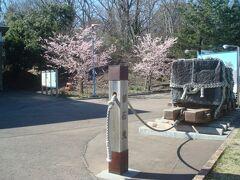 伊豆高原駅前にも、早咲きの桜が咲いていました。 3月上旬の伊豆高原、駅周辺で充分桜を楽しめました。