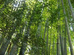 「報国寺」と言えば、鎌倉を代表する竹の寺です。 京都のお寺では竹林を多く見かけるけど、鎌倉では珍しいようですね。 竹の数は2,000本!
