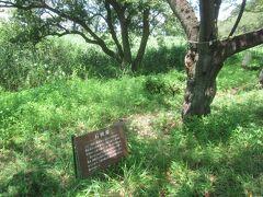 丸墓山古墳へ向かう道の脇には「石田堤」 天正18年に石田三成が忍城を水攻めした際の堤の一部 僅か5日で28kmの長さの堤を完成させたと言われている
