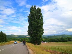 続いて、ケンとメリーの木  ポプラの木で、日産スカイラインのcmロケに使われた場所だ。