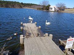 公園内の大池は渡鳥の越冬地として有名です.