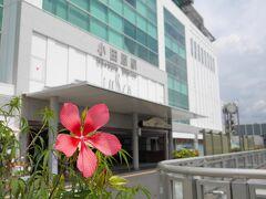 小田原駅まで戻ってきました! モミジアオイがきれいに咲いていました♪