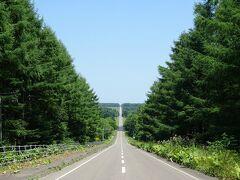 道の傾斜に合わせたような両側の木々の作り出す傾斜が妙にマッチして良い雰囲気。