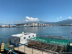 まずは田子の浦漁港を目指します。この漁港にある食堂で生しらす丼や釜揚げしらす丼が食べられるとありました。 天気が良ければ富士山が正面に見えます