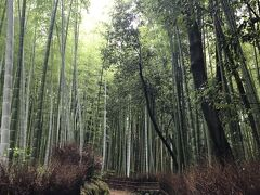 そして、百花苑を過ぎると天龍寺出口になっていて、竹林の小径に出ることができます。  静かな竹林の道です。