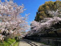 南禅寺の近くに残るインクライン。  全長582mの世界最長の傾斜鉄道跡で、高低差約36メートルの琵琶湖疏水の急斜面で船を運航するために敷設されたそう。  1891年から運航していましたが、舟運の衰退とともに1948年に役割を終えます。 廃線跡は現在、文化財に指定されています。  そして、この線路沿いにはソメイヨシノなどが植えられ、桜の名所になっています。