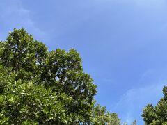 天気はかなり回復して夏の八重山って感じになってきた。 今日から黒島を楽しむぞー!!ヽ(^o^)丿