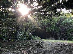 シュノーケリングの後は宿に戻ってまったりタイム。  暑さが和らいだので、ビジターセンターの裏の宮里海岸へ散歩。 木の間から差し込む西陽が幻想的でした。