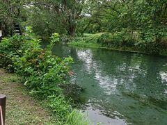 気を取り直して園内を散策します。 有名なわき水だけの川です。 名水百選2軒目です。 グラスボートとかあるらしいけど、コロナの影響で今は休業中。