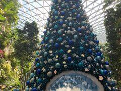 預け荷物はヨハネスブルグまでスルーなので、身一つで入国し、外には後輩ご家族が待っていてくれました。 まず行きたかったのが、シンガポール・チャンギ空港内にできたこのJewel(ジュエル)です。 まだクリスマスツリーがありました。