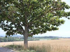 車は旭川空港方面に向かい、途中、美瑛方面に続く農道へ入って行きます まず初めは 美瑛の丘パッチワークの路 観光名所「セブンスターの木」