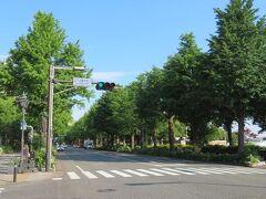 午前7時。朝のおさんぽ♪ ホテルの目の前の横浜山下公園通りを渡ります。